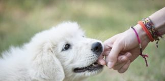 cucciolo di cane morde