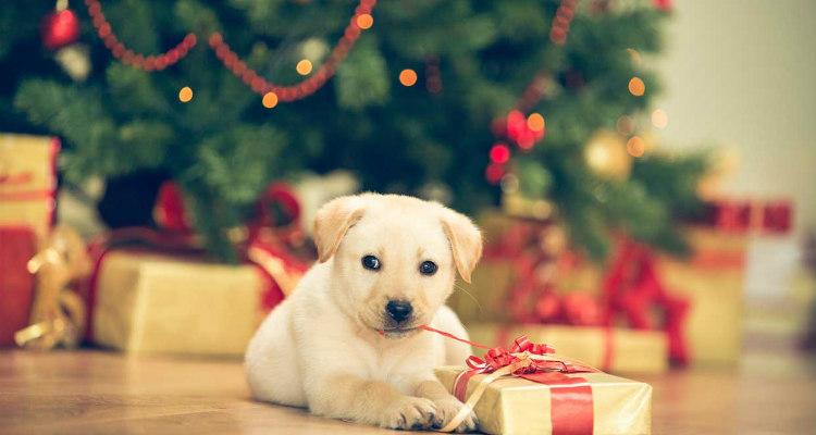 Animali Natale Immagini.Regali Di Natale Per Animali In Italia Si Pensa Anche A Loro