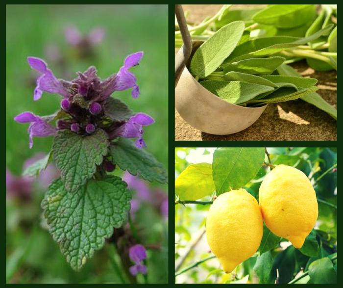 benefici di erbe e frutti