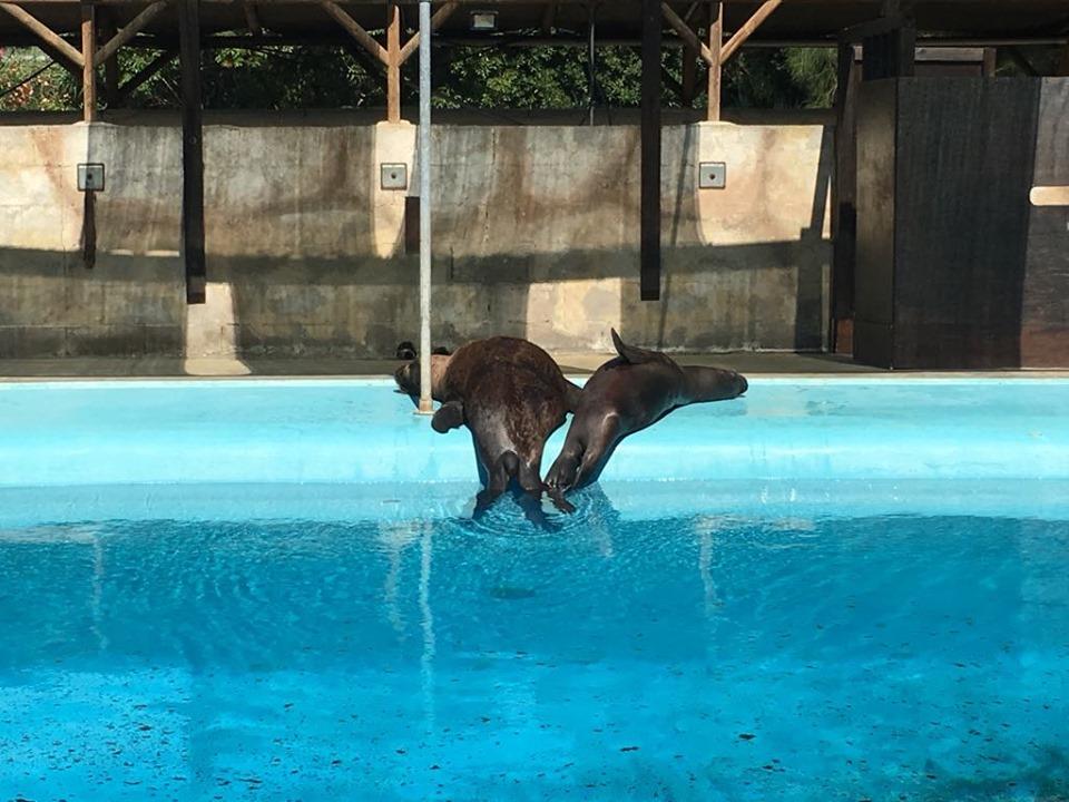 delfini zoomarine