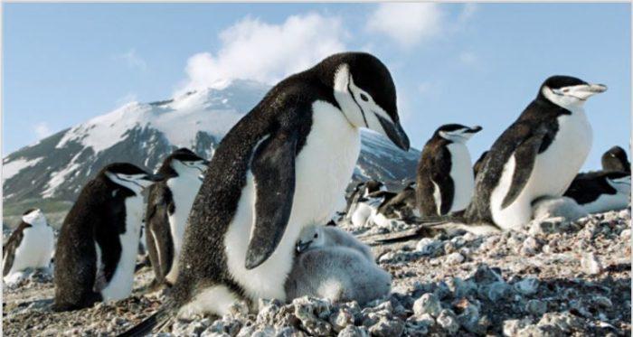 Earth Giornata mondiale Terra Pinguini